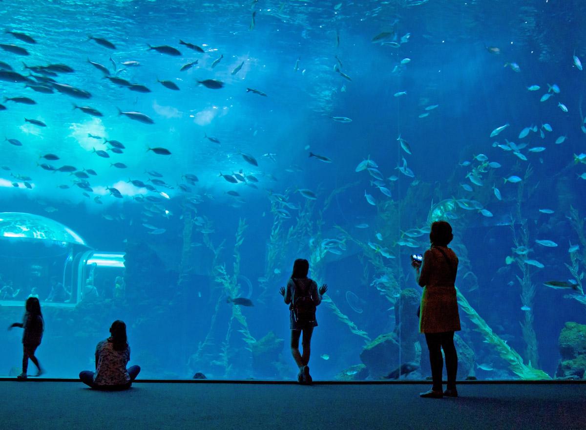 Das Palma Aquarium auf Mallorca eignet sich für einen tollen Ausflug mit Kindern